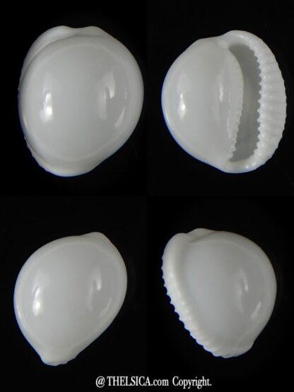 Trivella millardi 16,66 mm Gem-0